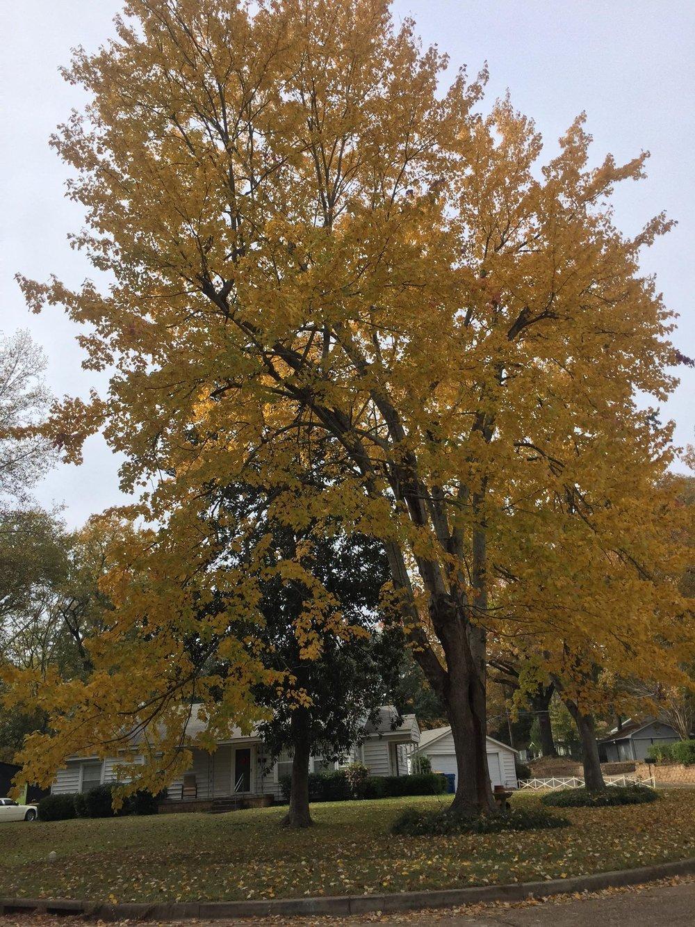 Fall Marissa 4.jpg