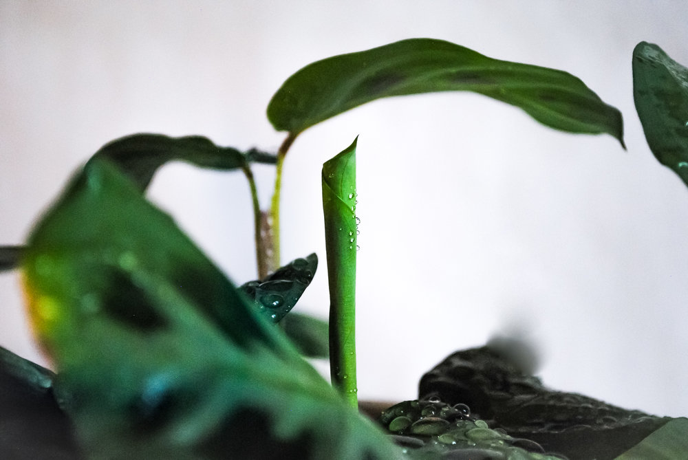 How darling is this new, unfurling leaf?