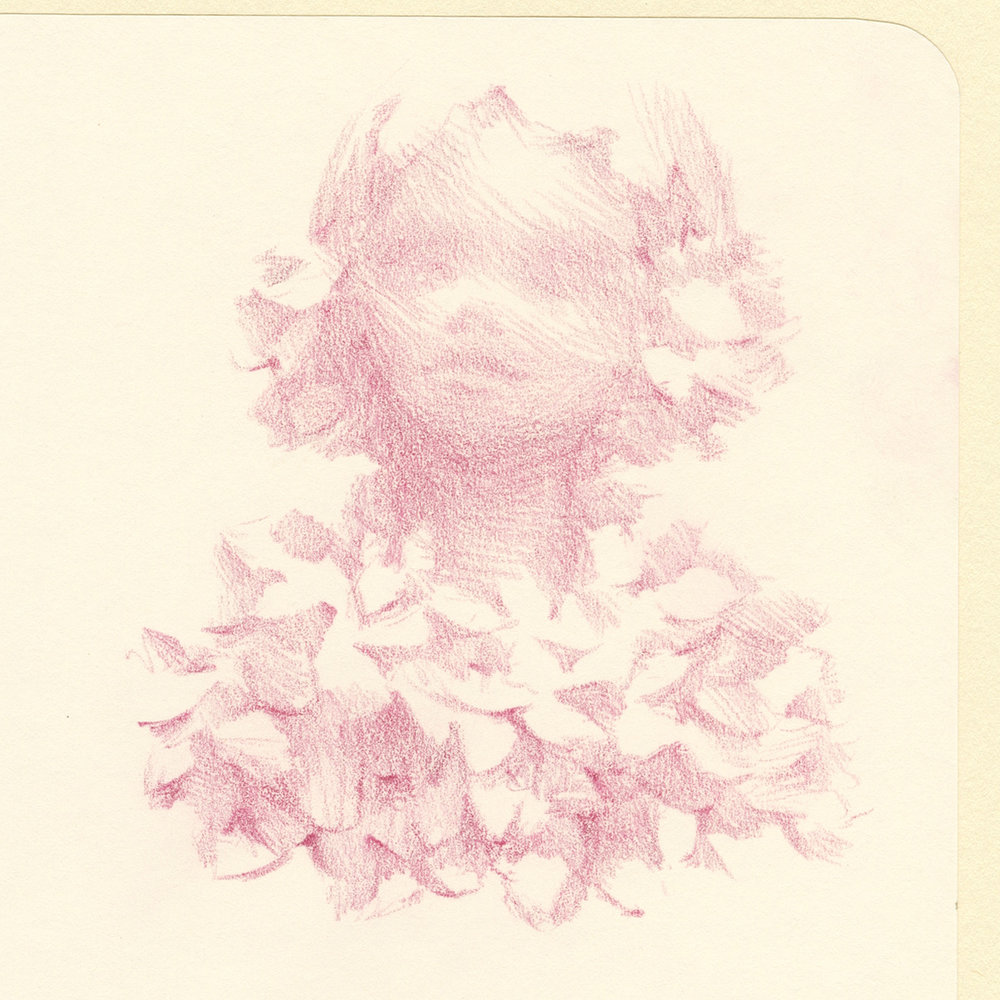 Portrait art with flowers in pencil by Laura Dreyer.