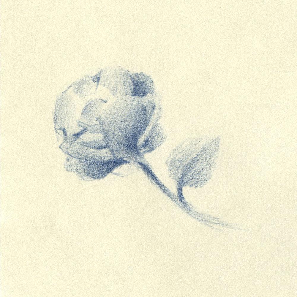 Florals-Pencil-04.jpg