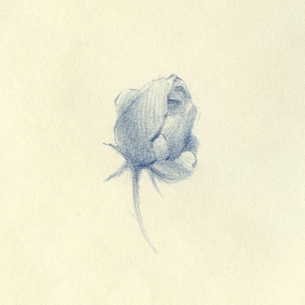 Florals-Pencil-04.2.jpg