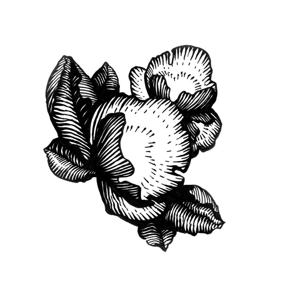 floral_ink_19.jpg