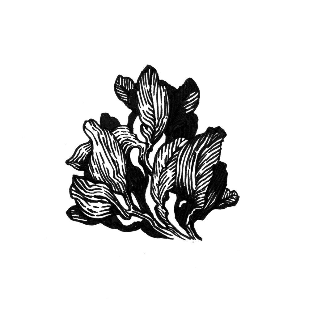 floral_ink_18.jpg