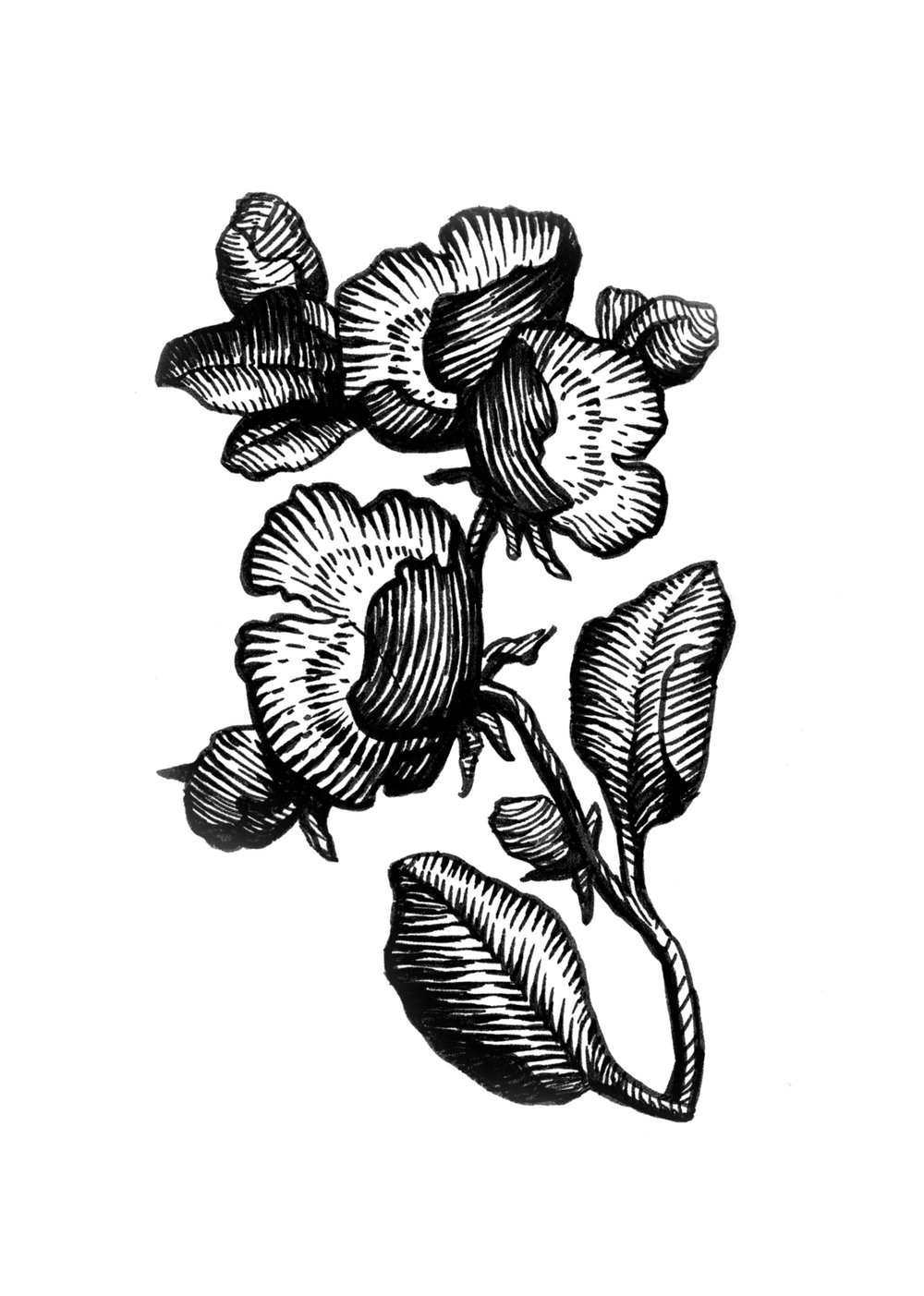 floral_ink_14.jpg