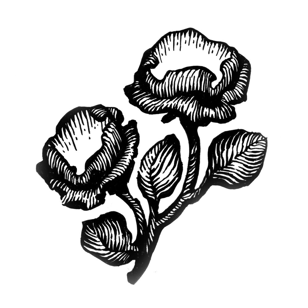 Floral illustration by Laura Dreyer, drawn in ink.