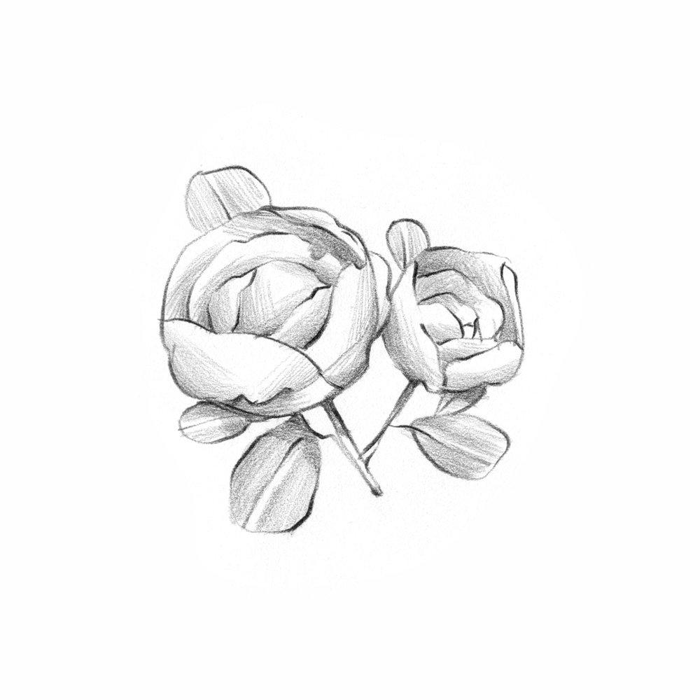 Florals-Pencil-13-.jpg