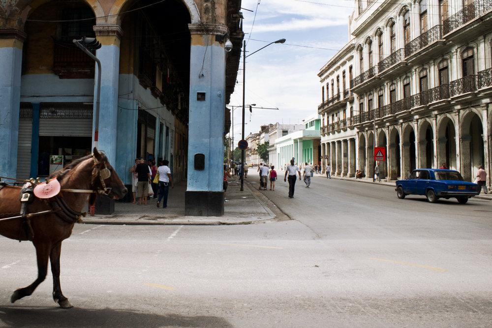 wojtek-jakubiec-photographer-montreal-cuba-havana-street-documentary-horse-streets-.jpg