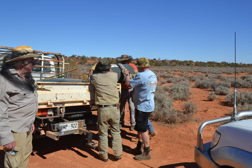 Manually lifting the wire netting off the back of the ute was an issue.