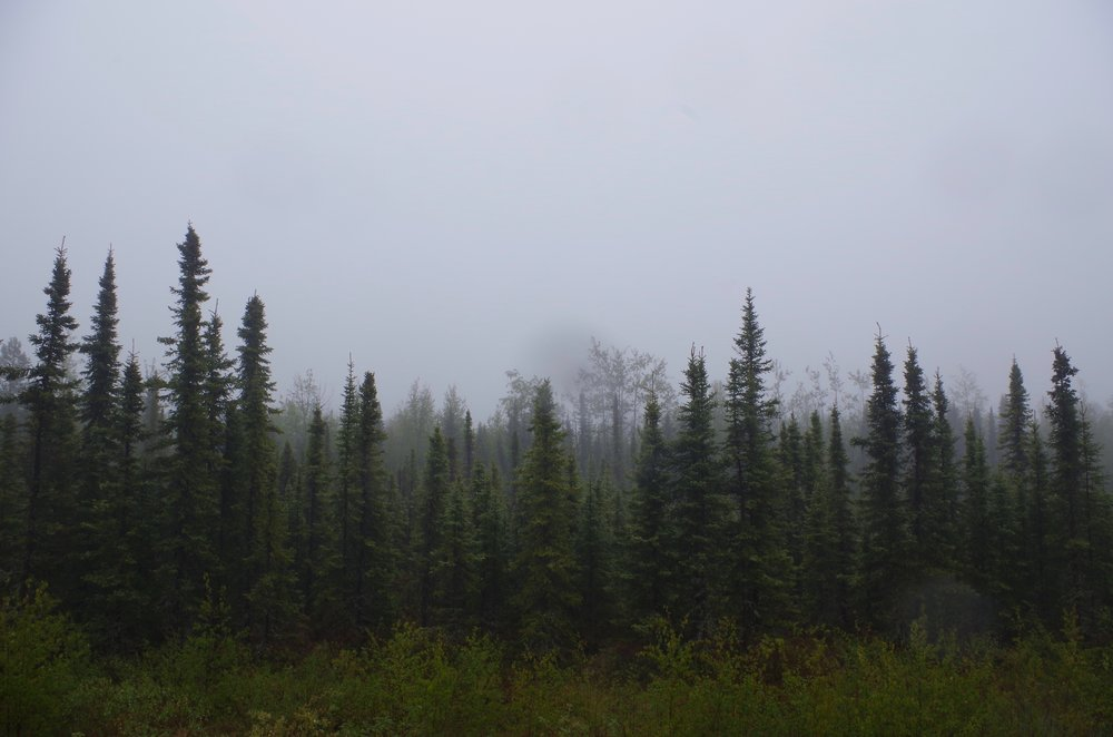 Nothing beyond the black spruce. (Photo by Trina Moyles)