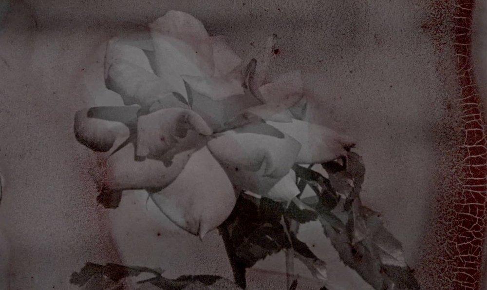 rosegrab.jpeg