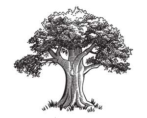 TREE_ONLY_noCircle_50.png