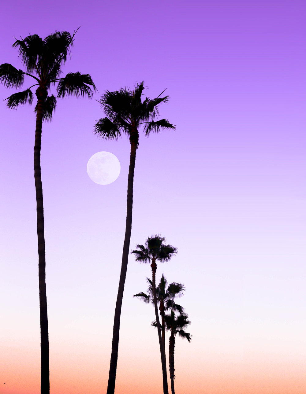 Palm and Moon.jpg