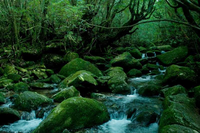 Deep forest in Hokkaido
