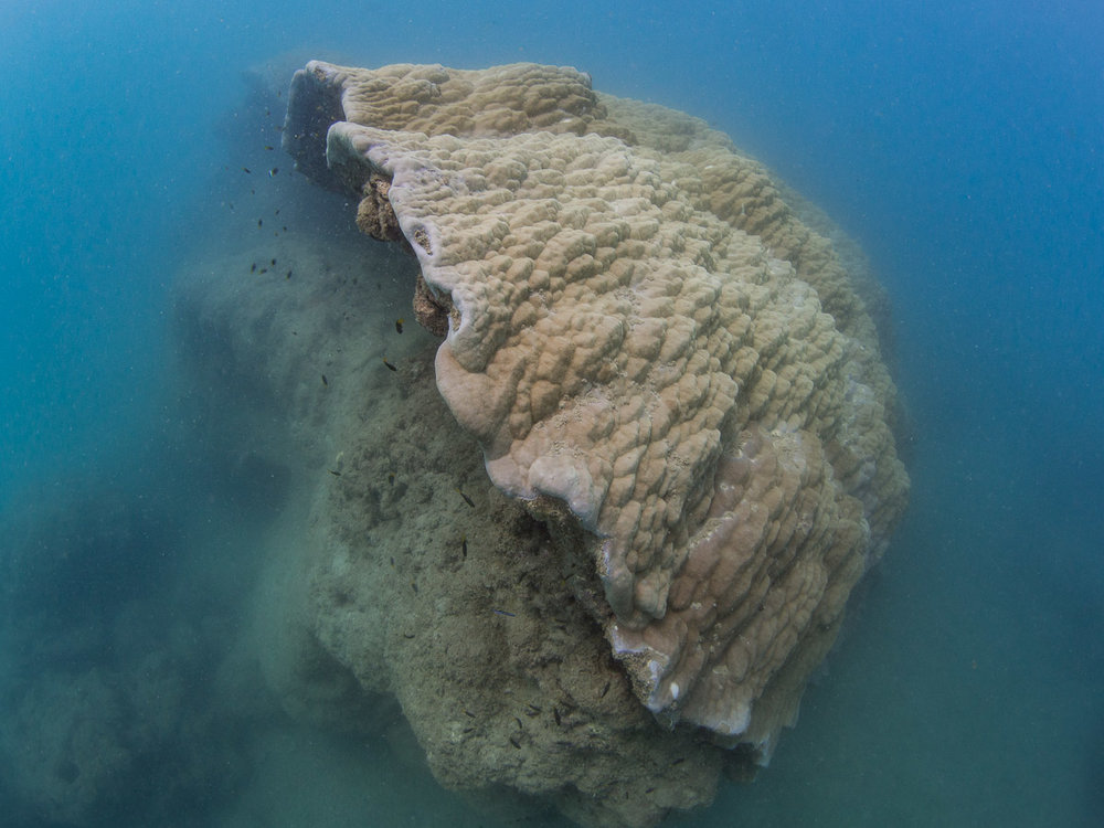 Toppled Coral