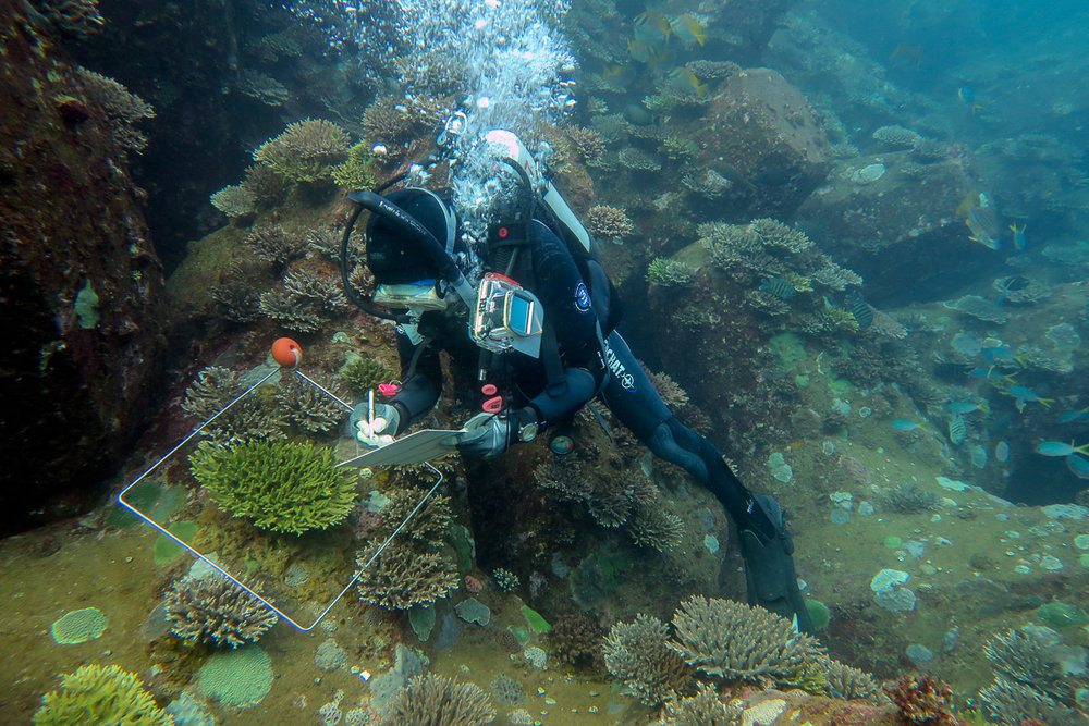 Above:  Surveying coral recruitment on port breakwater at Cape Preston, Western Australia.