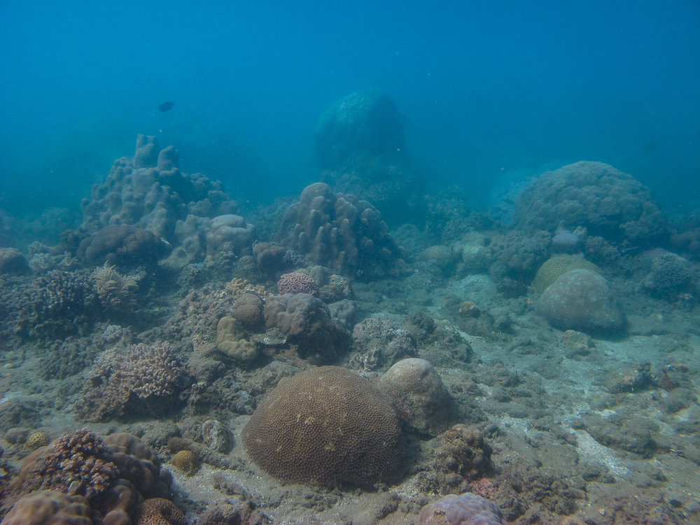 Coral communities at Vemasse were lacking  Acropora  corals due to bleaching in 2016-2017