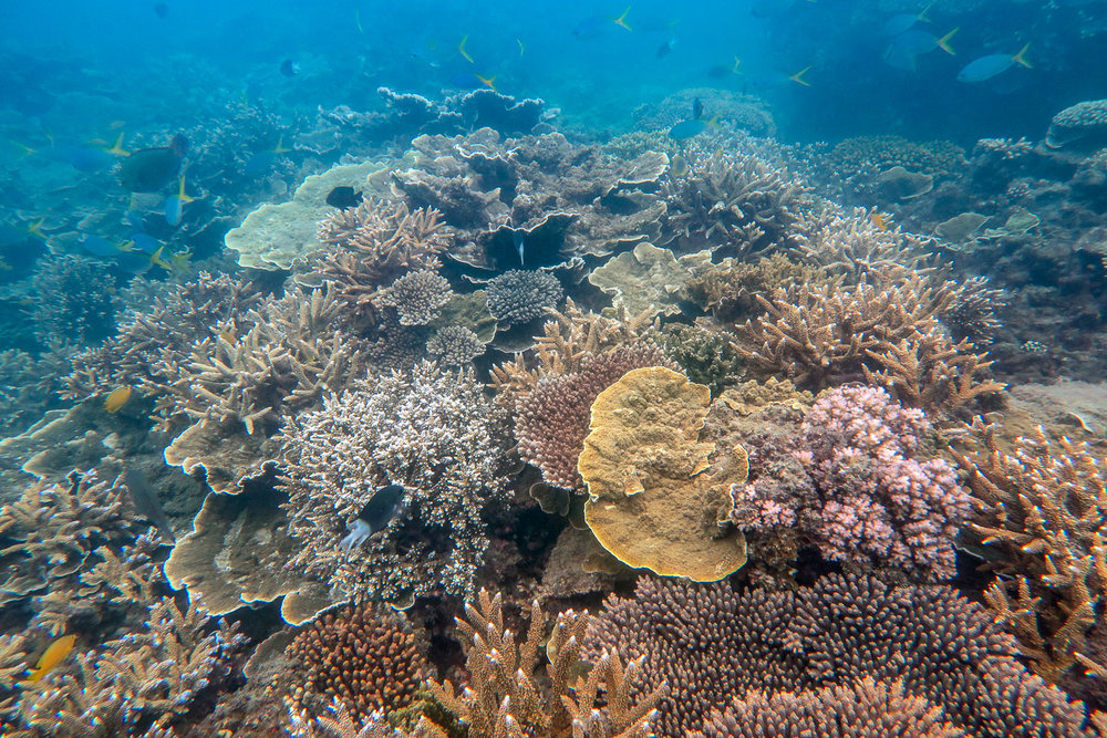 Many different species of coral were represented