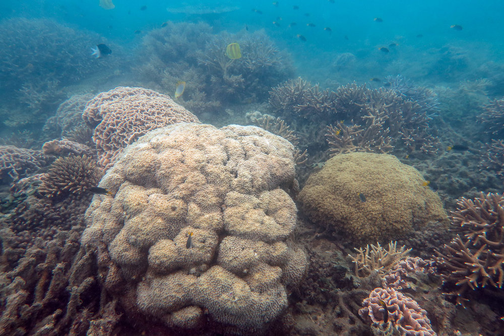 A variety of large coral colonies