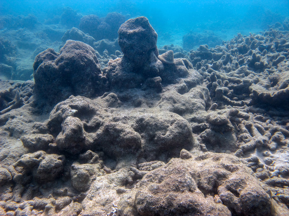 No new corals are yet showing on devastated patches of reef