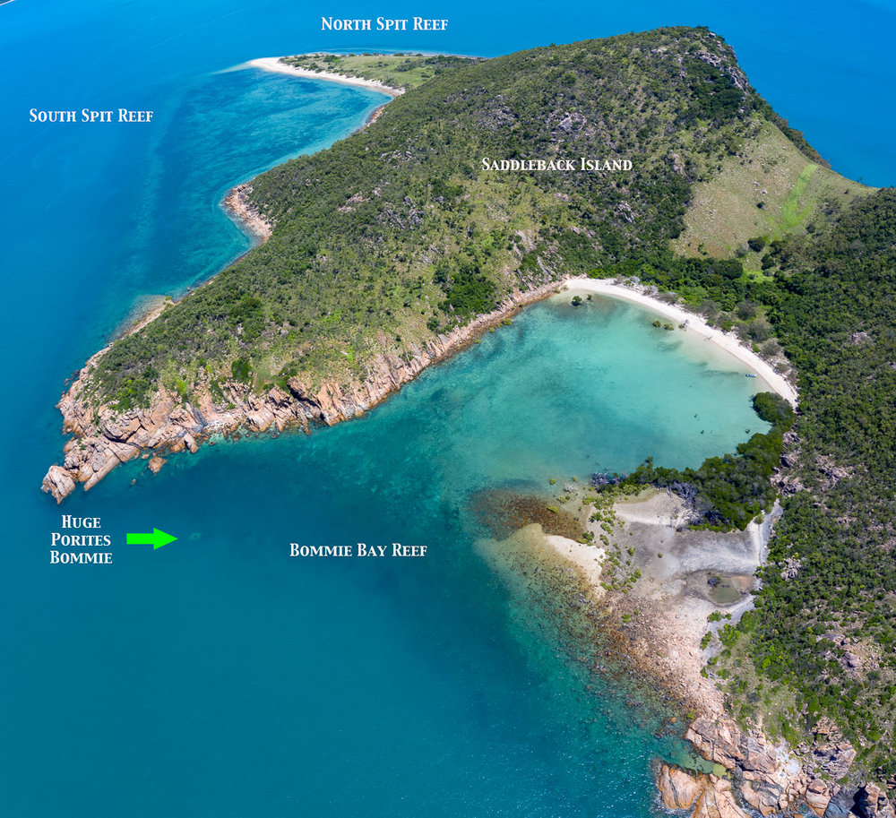 Saddleback Island fringing reef positions