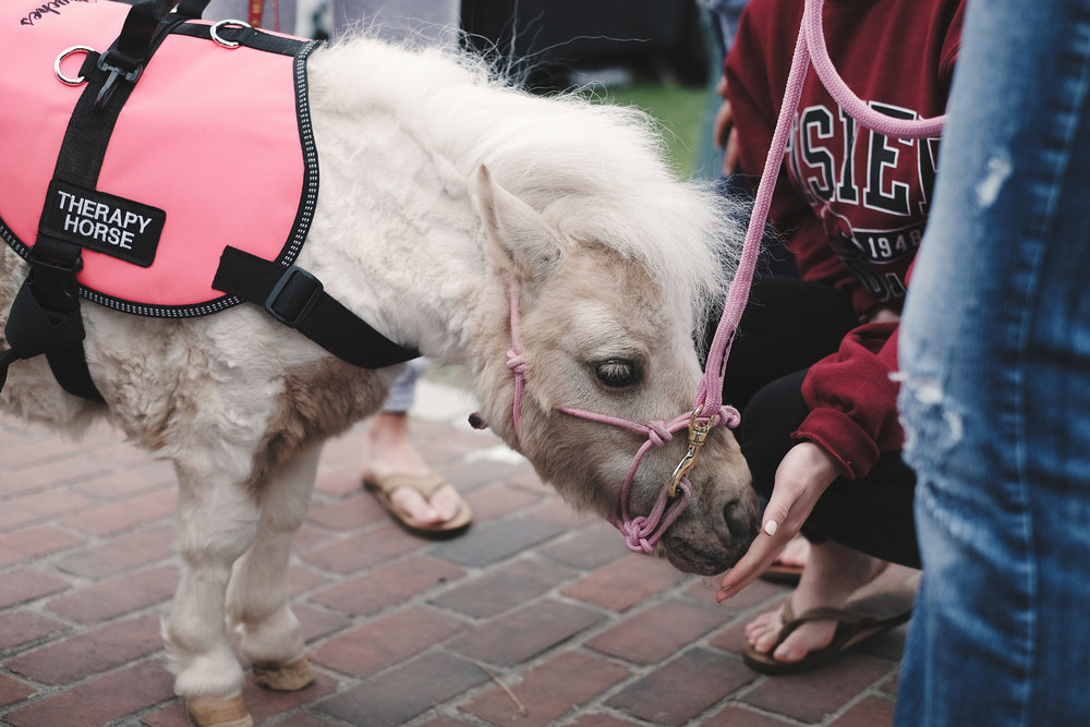 SOWA has cute dogs, but Andover has a cute dwarf mini therapy horse. :)
