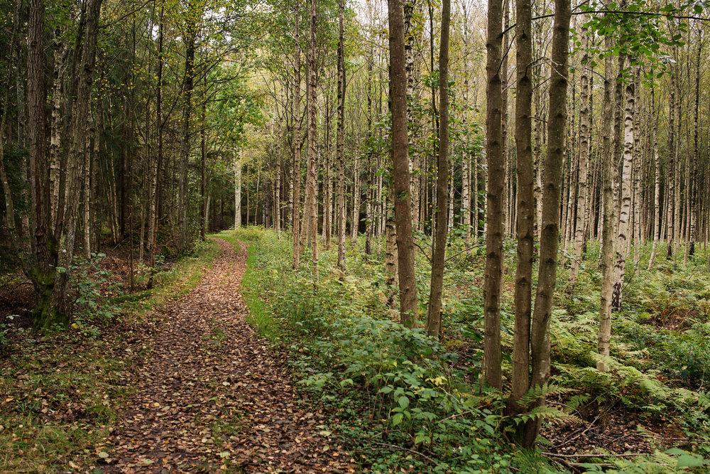 skogssti