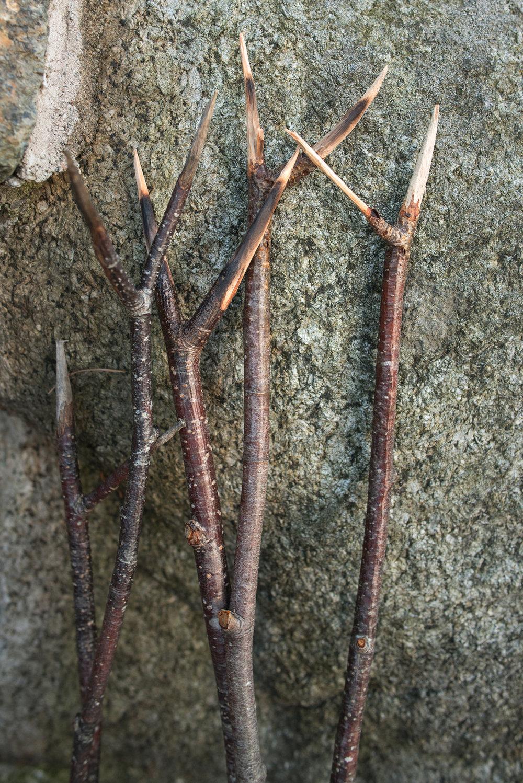 hyttehøst (16).jpg
