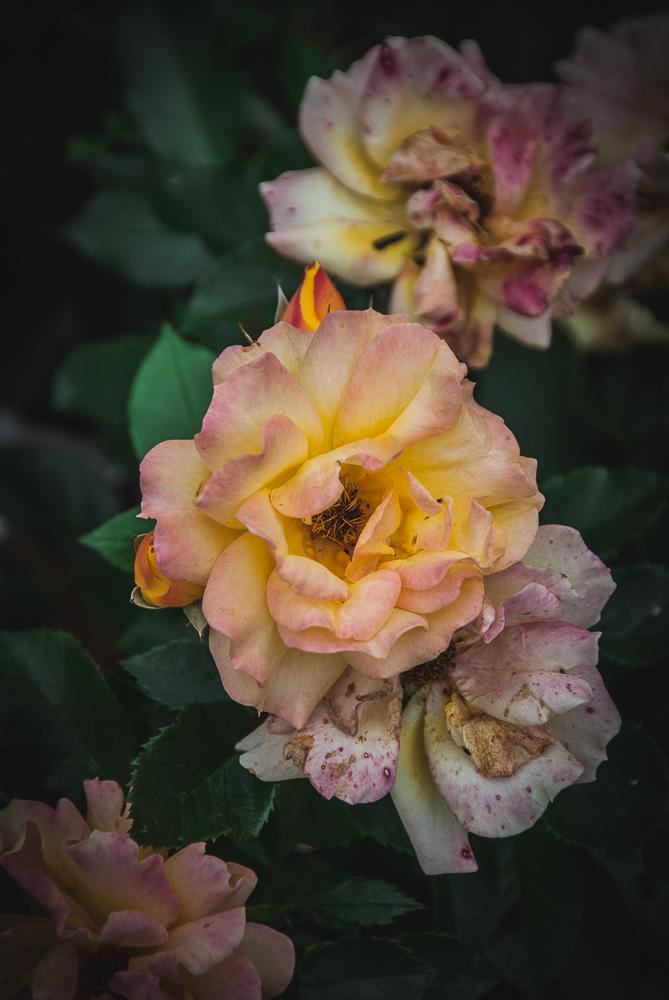 roser-4025.jpg