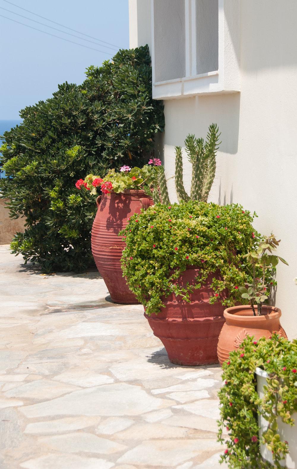 a kreta potteplanter (1).jpg