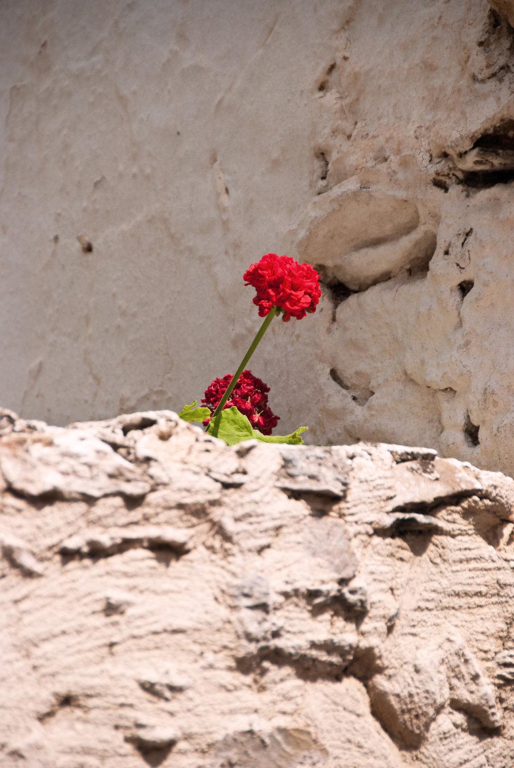 a kreta potteplanter (2).jpg