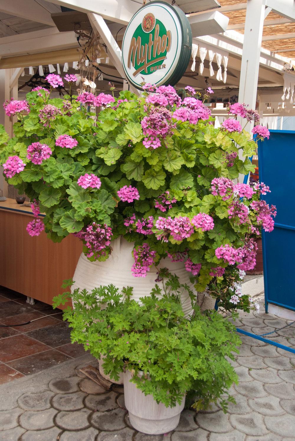 a kreta potteplanter (4).jpg