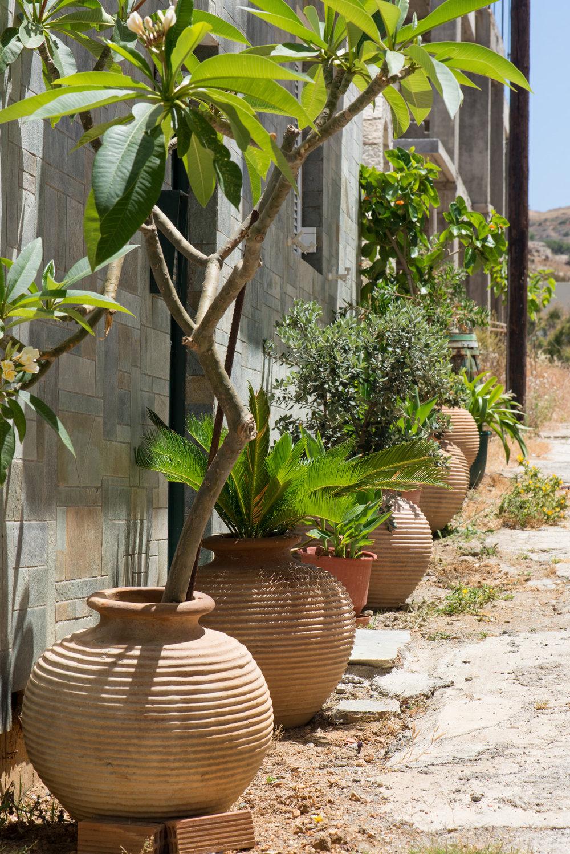 a kreta potteplanter (9).jpg