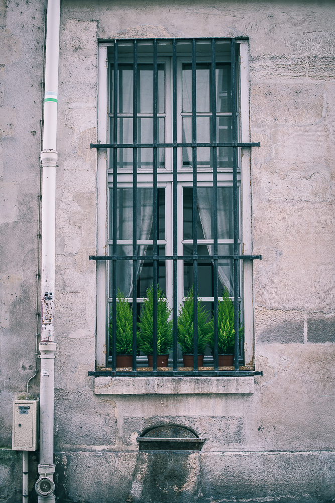 window with bars in front and green plants-1.jpg