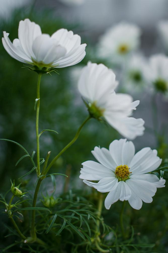 sommerblomster-1.jpg