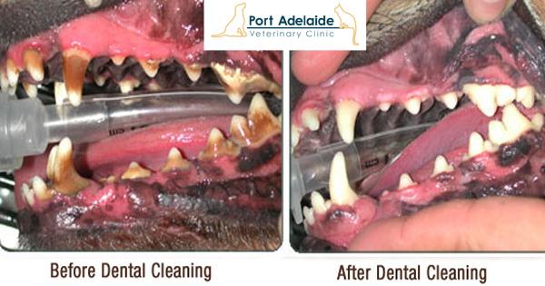 pav teeth.jpg