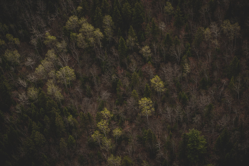 LaTuque_Landscape_renrob©_72dpi-9.jpg