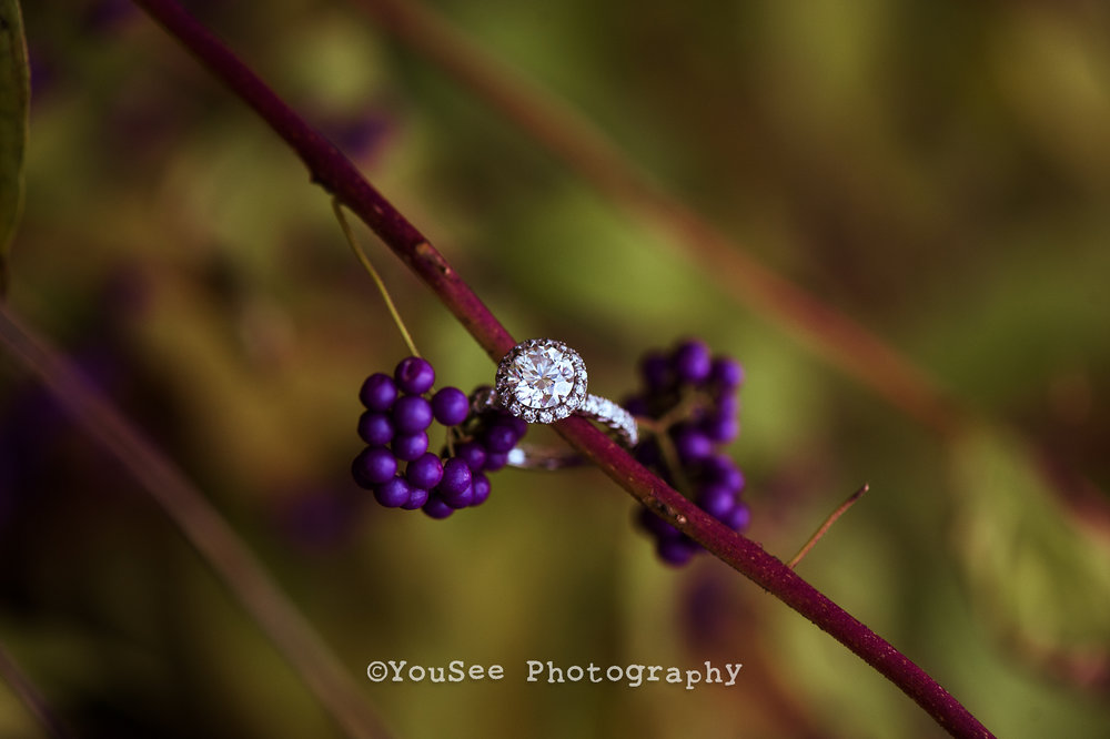 engagement_fall_meadowlark (3)