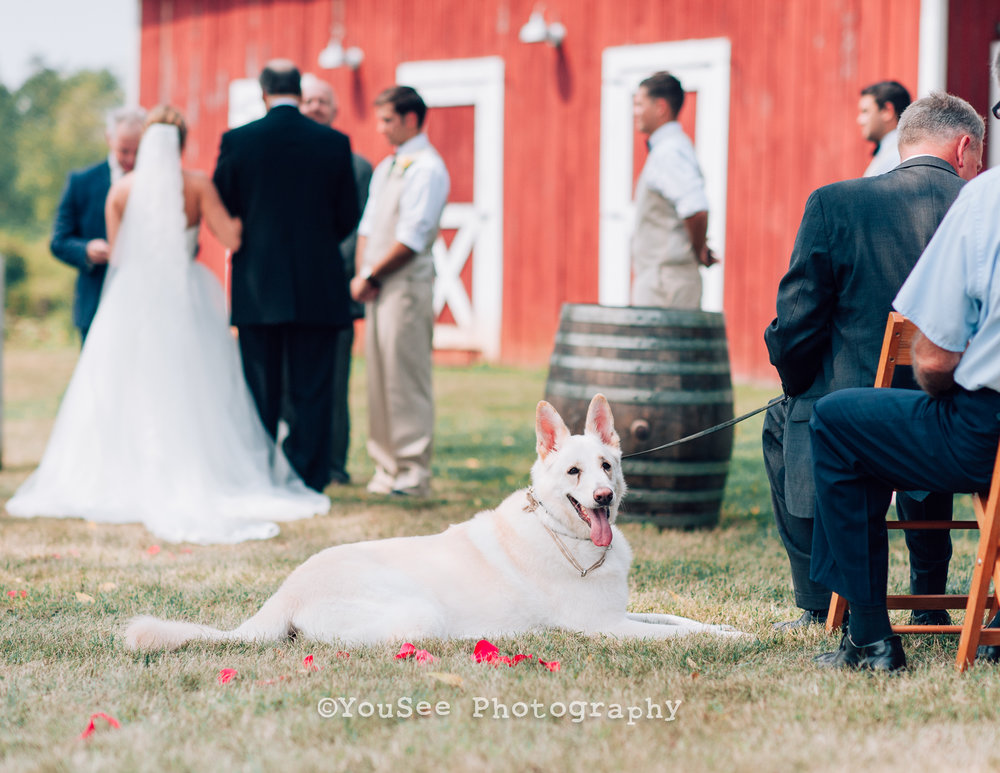 wedding_westwoodfarm_orange_virginia (13)