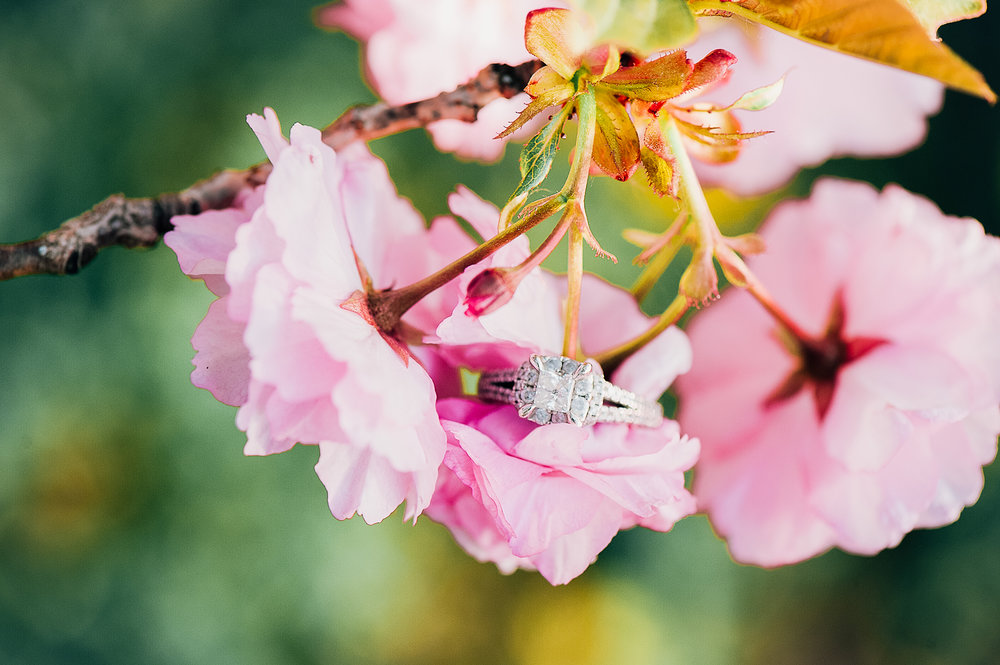 engagement_cherryblossoms_virginiaweddingphotographer_JanieHunter (1).jpg