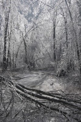 bob swinburne\'s driveway