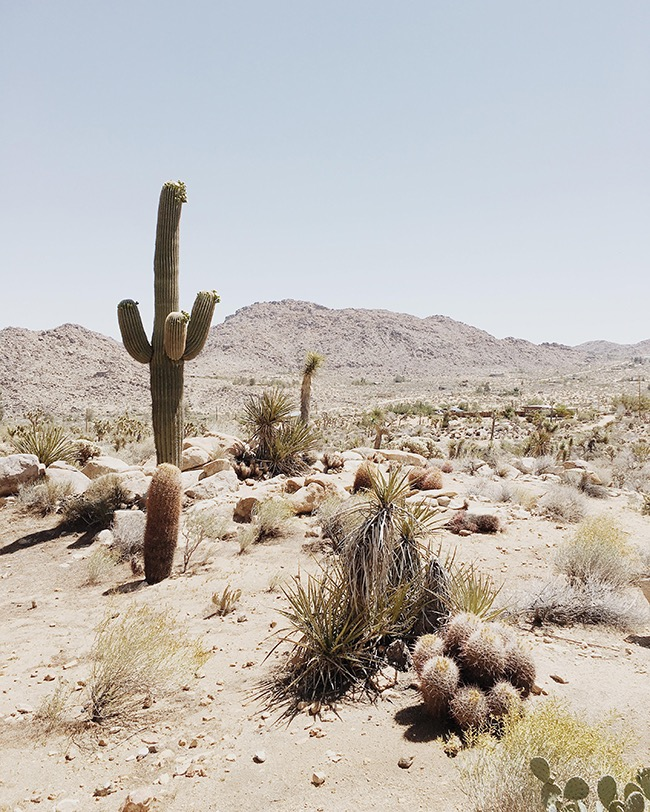 guide-to-joshua-tree-california-almost-makes-perfect.jpg