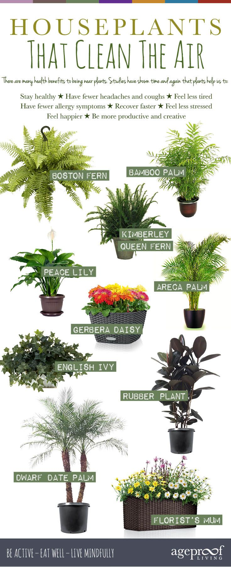 great-house-plants-indoor-gardening-best-air-cleaning-elegant-10-houseplants-that-clean-the-help-detox-your-home.jpg