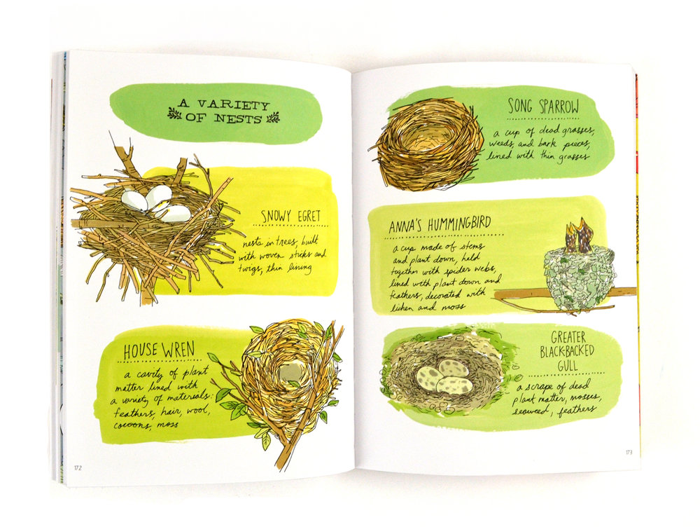 Nature Anatomy — Julia Rothman
