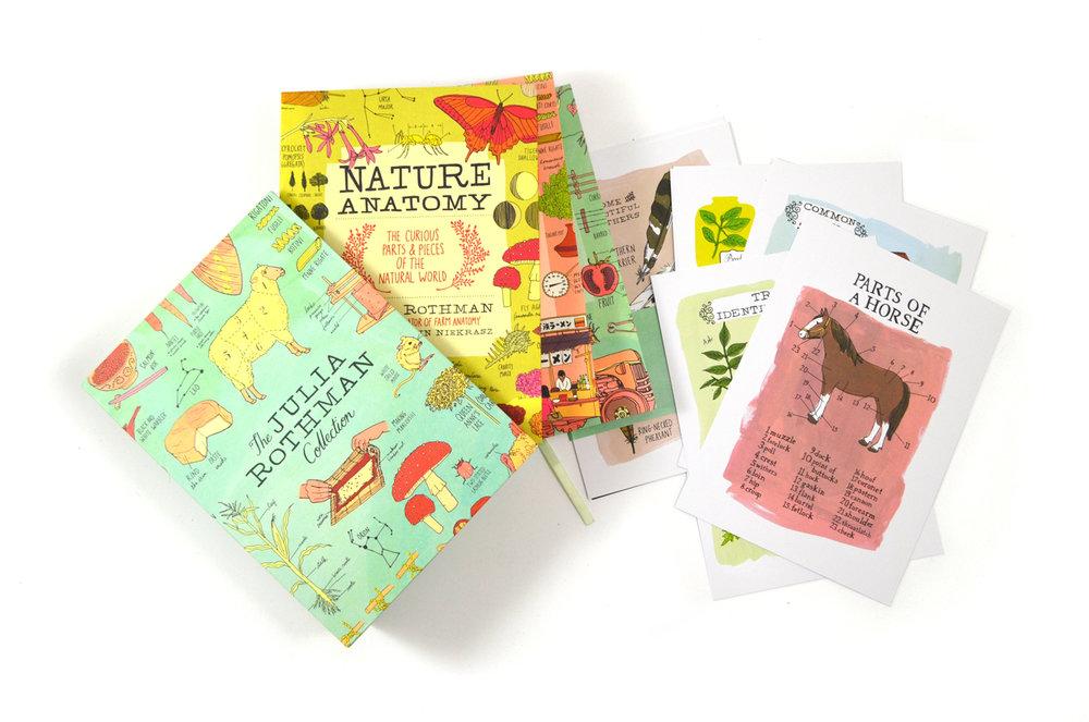 The Julia Rothman Collection Boxset — Julia Rothman
