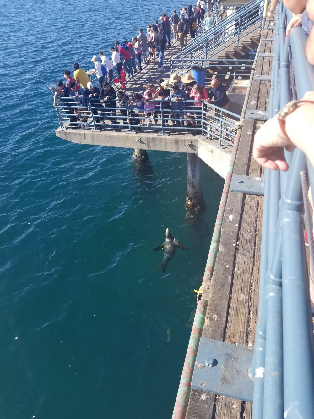 Don't Feed The Sea Lions