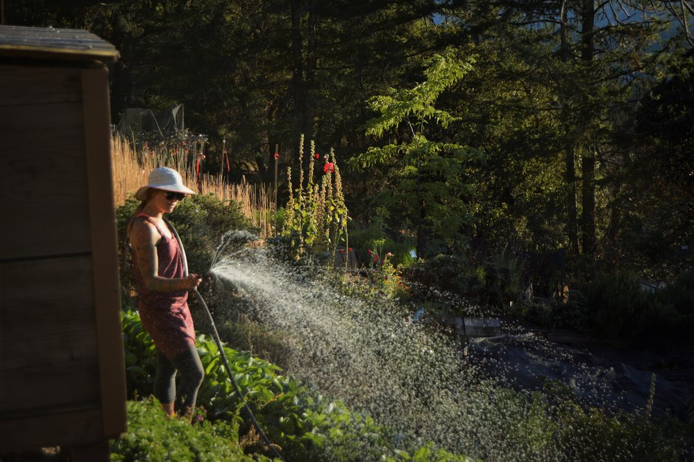 Sharon Coombs watering the beds.