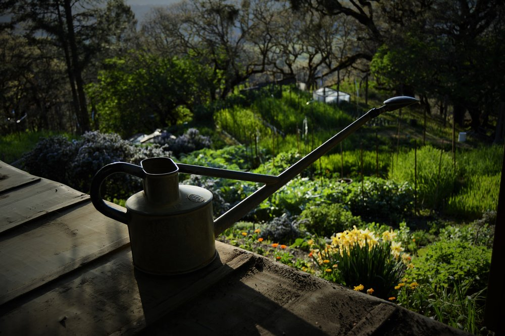 Hauss Watering can, our choice for watering seedlings.