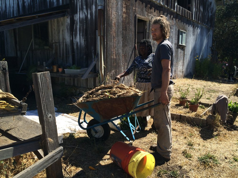 James with a load of parsnips.