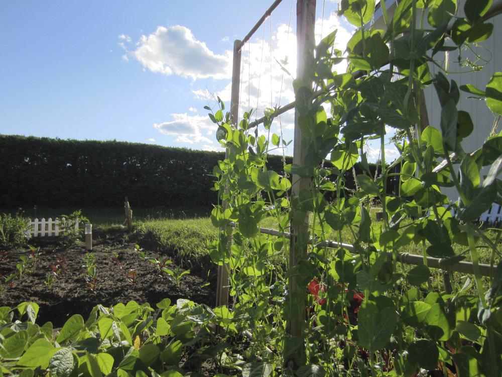 ontario gardens-108.jpg