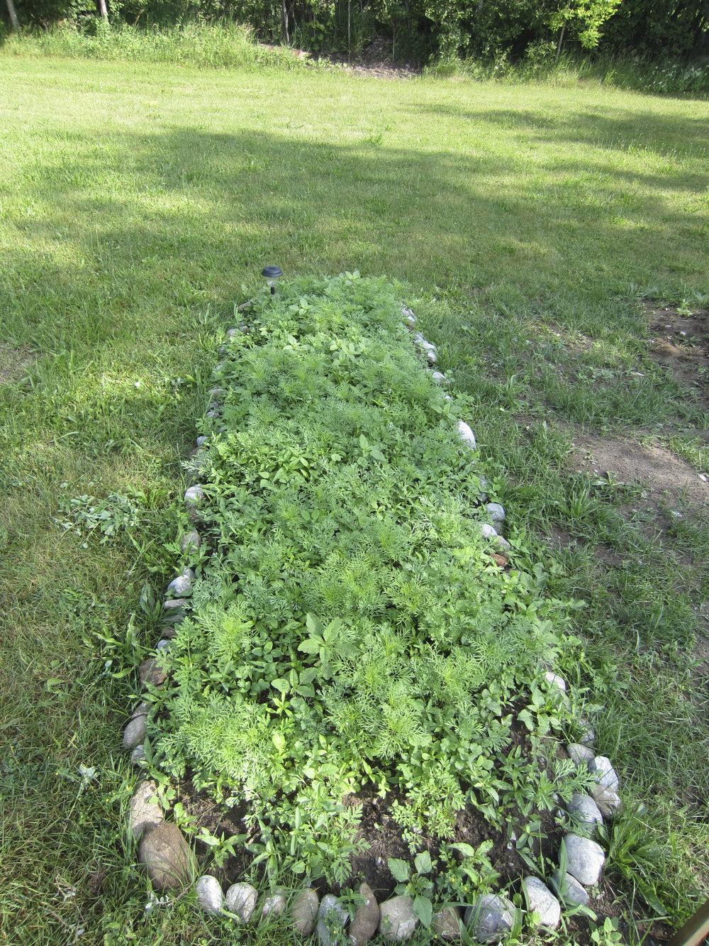 ontario gardens-115.jpg